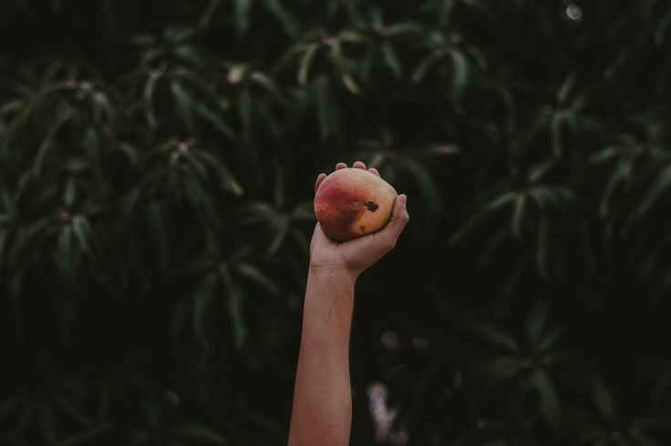 person holding red and yellow fruit