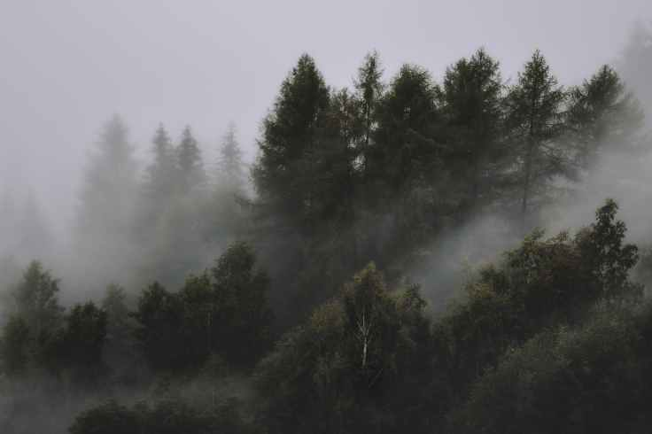 photo of foggy forest